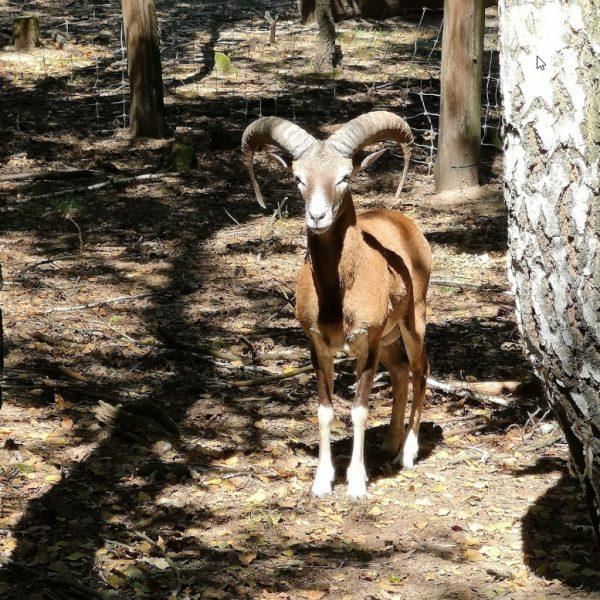 Nírješská botantická záhrada a mini zoo poteší malých i veľkých